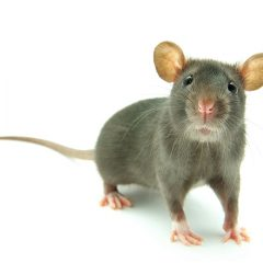 Rodenticides training for Control of Rats and Mice